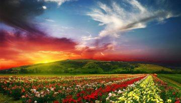 colors-paradise