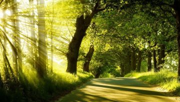 summer-forest-sunshine-1440x900